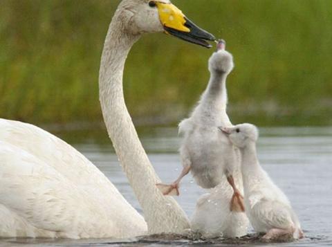Красивая подборка фотографий животных и природы