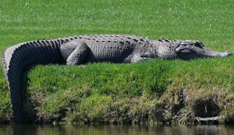 Во Флориде засняли колоссаль…