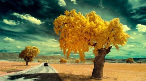 15 завораживающих деревьев со всего мира