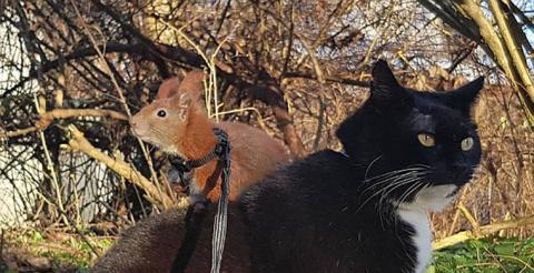 Кот подружился с белкой, упа…