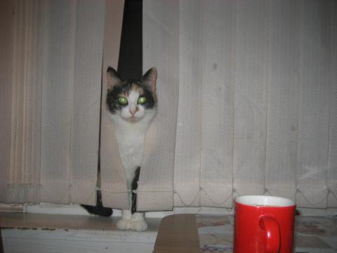 Главная кошка.