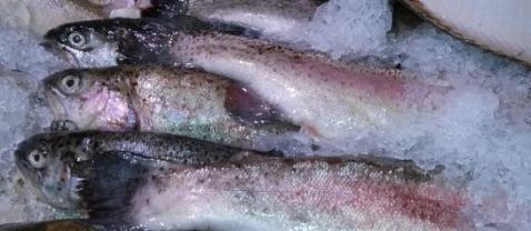 В Россию не пустили 350 кг финской трески и лосося