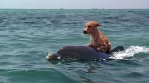 Спасти собаку...Миссия выполнима!