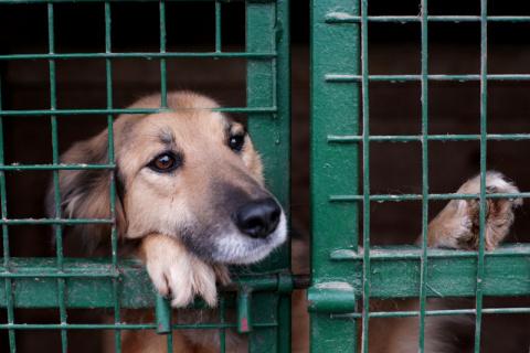 Особенности собачек из приюта