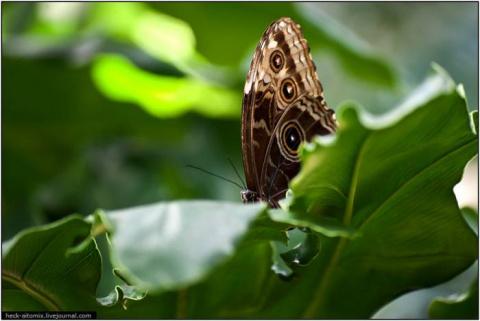 Парк бабочек в Канаде (20 фото)