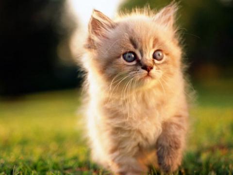 Котёнок обдурил всех!