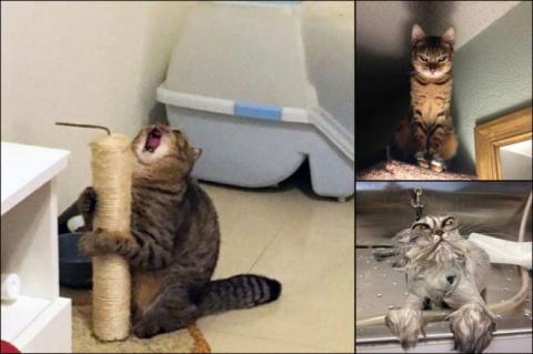 Коты - натуральные актёры
