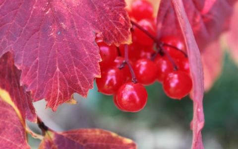 МИР РАСТЕНИЙ.Осенних ягод карнавал
