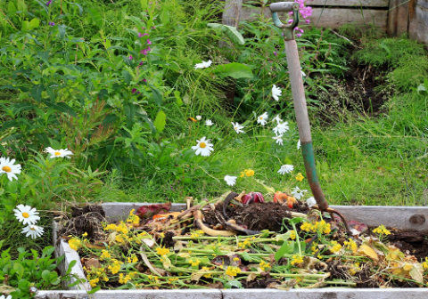 Органические удобрения из растений: следуем законам природы