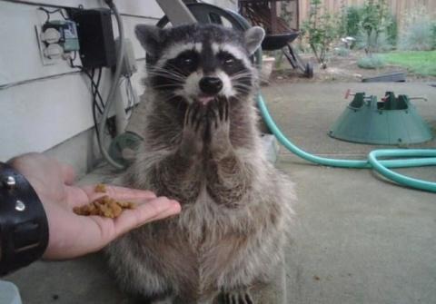 Забавные животные, которые в…