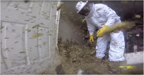 Как выглядит уничтожение огромного гнезда шершней глазами пчеловода
