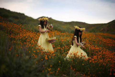 Буйство красок в Калифорнии