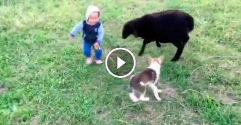 Щенок защитил ребёнка
