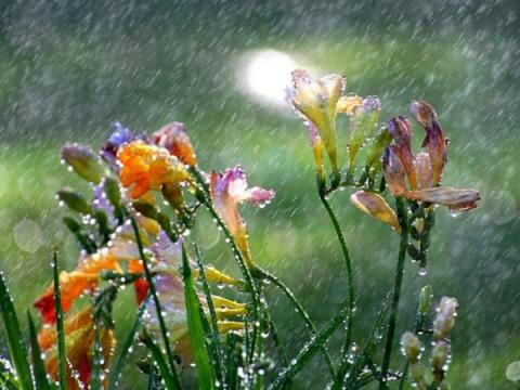 Каплями дождя