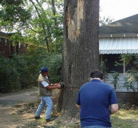Как не надо пилить дерево