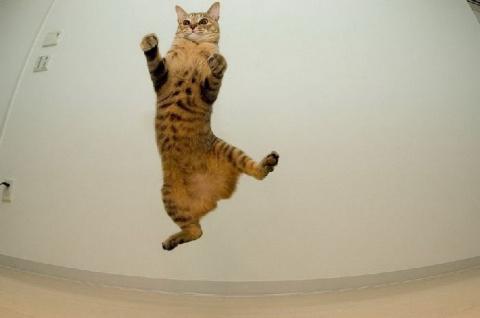 Летающие коты))