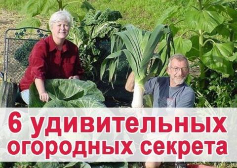 Удивительные секреты для огорода