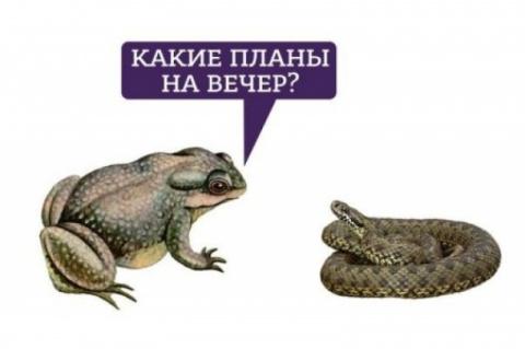 Жаба и гадюка в позах из Камасутры. Максим Войтенко