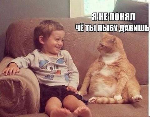 Смешные и позитивные картинк…