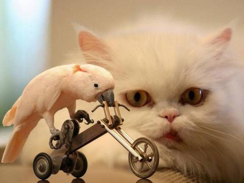 Милый котик и быдло попугай
