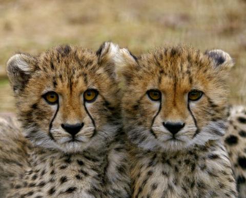 30 пар чудных близнецов сред…