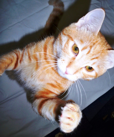 Как вырастить идеальную кошку?