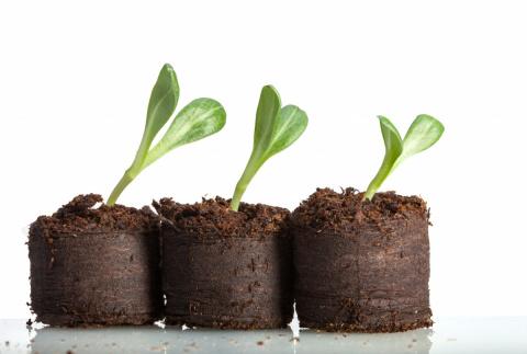 15 ошибок при выращивании рассады, которые мы допускаем чаще всего