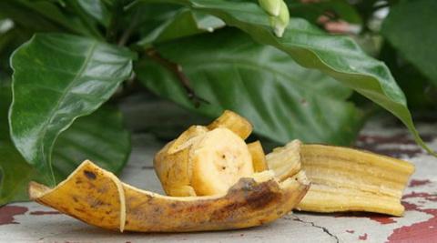 Банановая кожура для комнатных растений