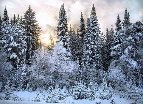 Дело было зимой в тайге