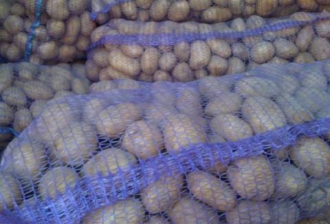 Вот почему стоит немедленно выбросить перезрелый картофель