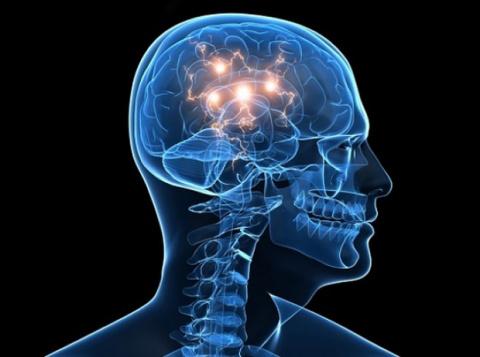 Феномены мозга, которые мы только начинаем понимать