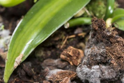 Белый налет в цветочных горшках: причины и методы борьбы
