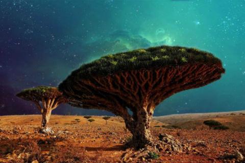 Деревья, в существование кот…