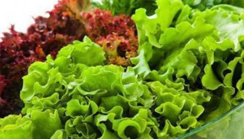 Почему горчит салат листовой…
