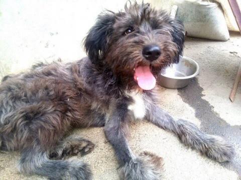 Бездомный пес из Ростова, ко…