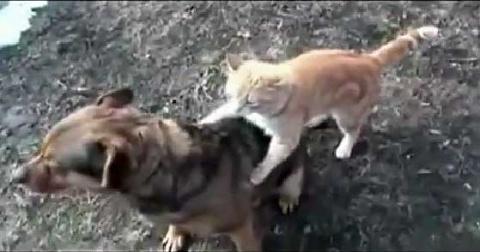 Суровый Челябинский Кот (видео)