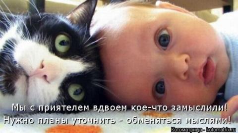 Лучшие котоматрицы за прошед…