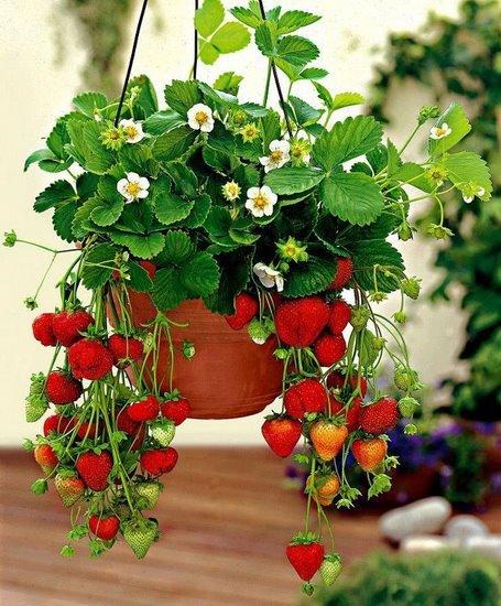 Подборка дачных и садовых идей