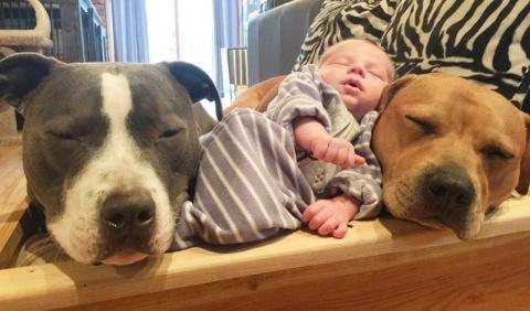 4 собаки и кошка, ухаживающи…