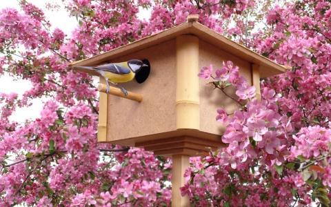 Как и зачем привлечь птиц на участок