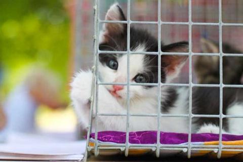 Про кота - история из жизни