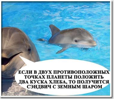 Дельфины научились добывать …