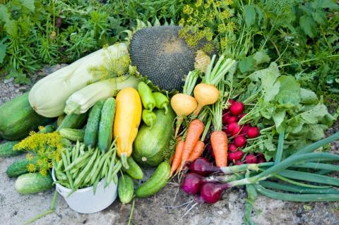 Вот как эффективно сформировать грядки и цветочные клумбы, чтобы урожай был максимальным