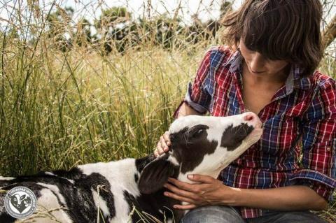 Ферма для спасённых животных в Чили
