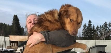 Бездомные псы с юга России нашли хозяев в Финляндии