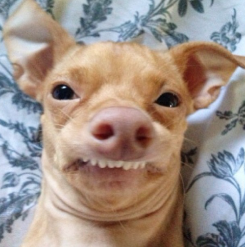 Собака улыбака и её анекдоты