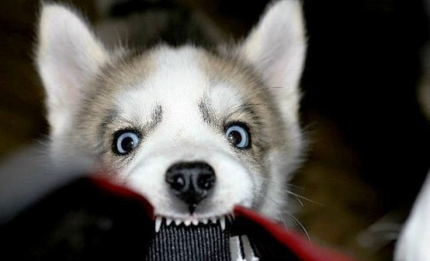 Как фотографировать щенка…