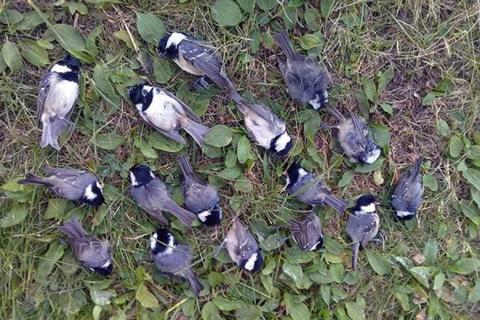 В Москве и Подмосковье нашли множество погибших по неизвестной причине птиц
