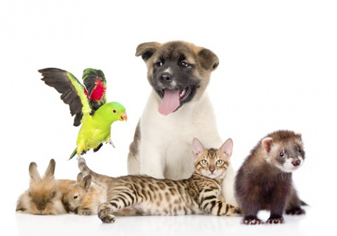 Каких животных принято держа…