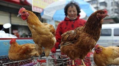 На Тайване зафиксирован перв…